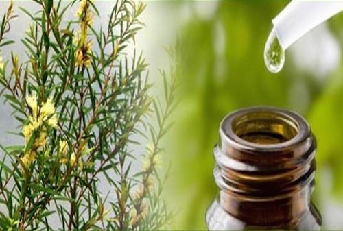 Eterisk tea tree olja i hudvård och kroppsvård