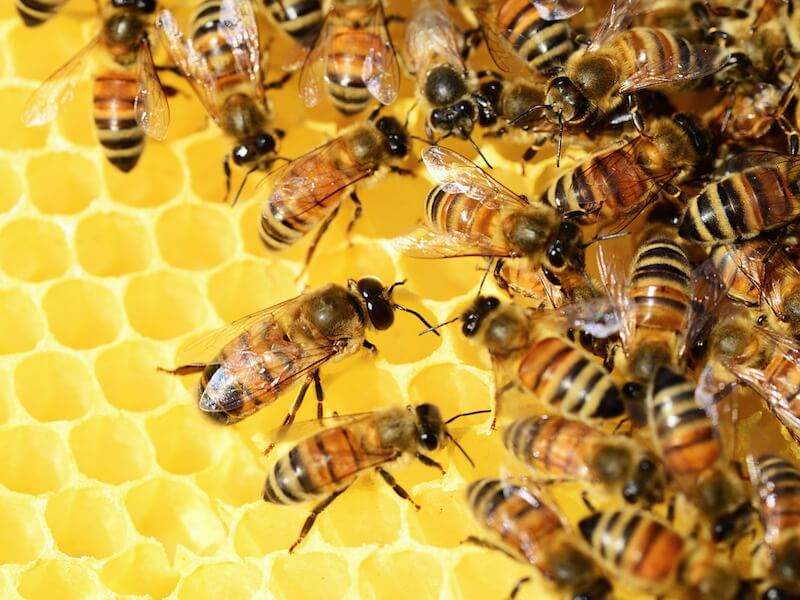 Bidrottninggelé - Naturens nektar för hälsa och skönhet
