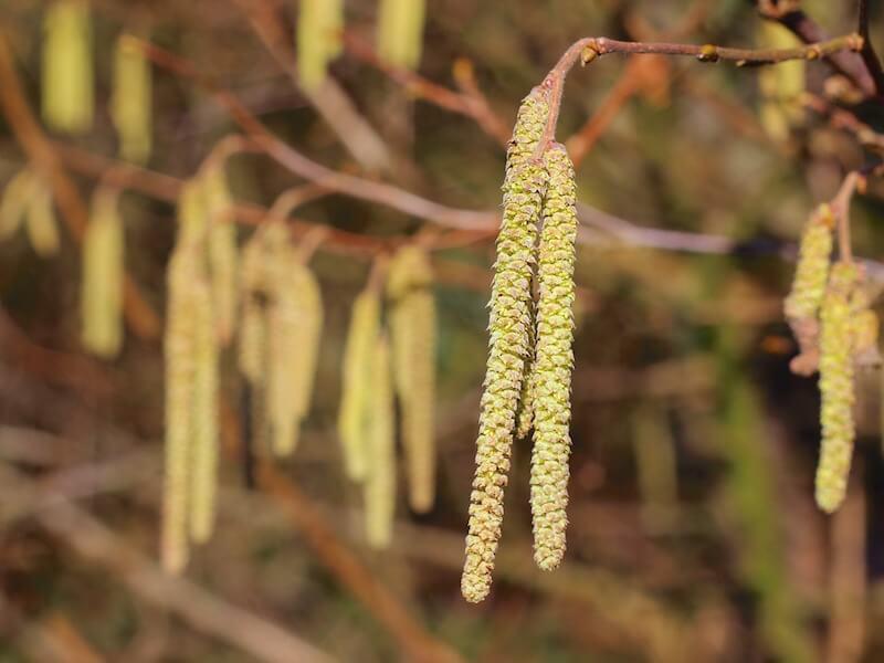 Njut av våren och sommaren utan pollenallergi