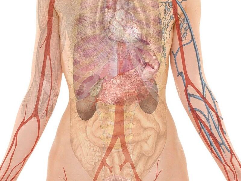 Vikten av syra-basbalansen i kroppen
