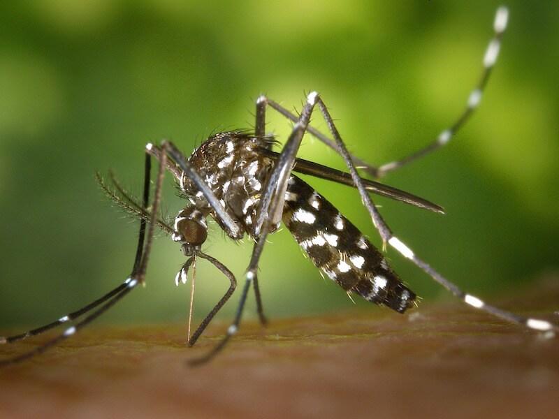 Håll myggen borta i sommar