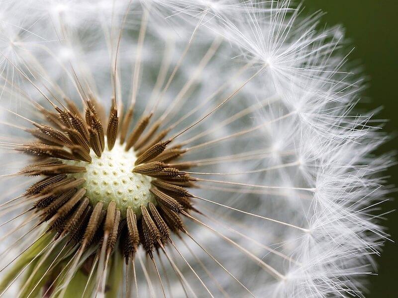 Så kan nässköljning hjälpa vid pollenallergi