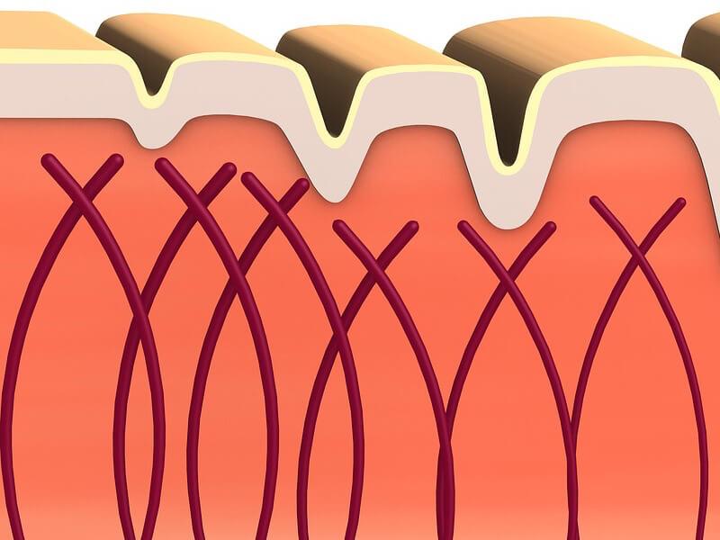 Att stödja kollagenet i muskler, leder och hud