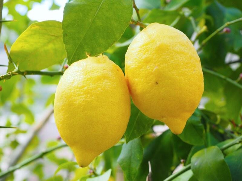 Citrondoft kan få dig att tänka klarare