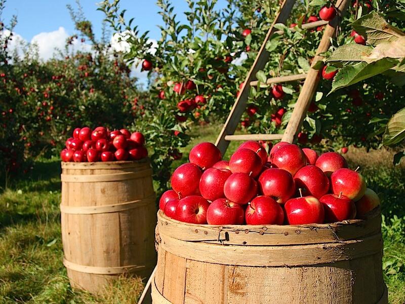 Äppelcidervinäger kan ge bättre insulinkänslighet