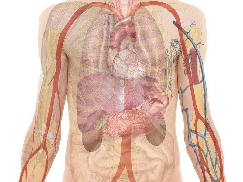 Att rena kroppen från tungmetaller