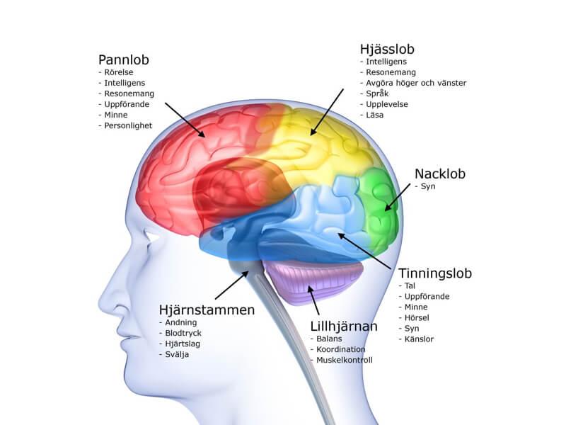 Kost och kosttillskott för minnet och hjärnan