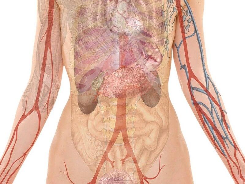 Naturliga medel för att förebygga och bli av med urinvägsinfektion (UVI)