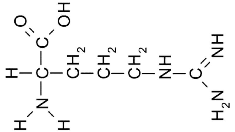 Funktion av aminosyran arginin och som kosttillskott