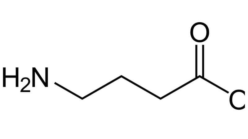 Funktion av aminosyran gaba i kroppen