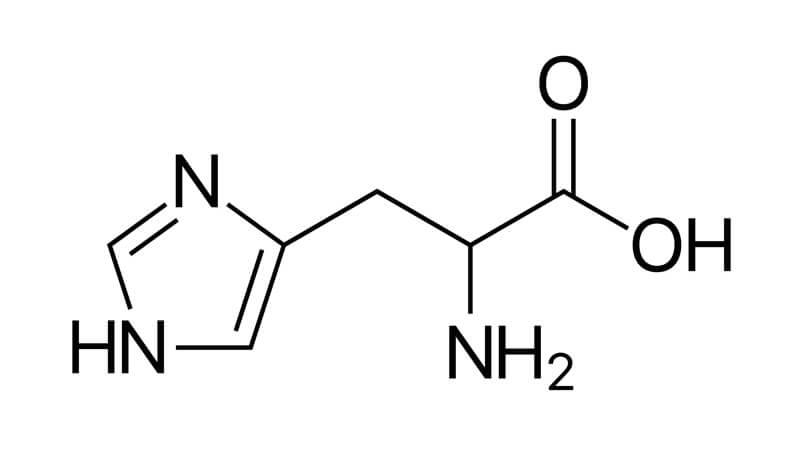 Funktion av aminosyran histidin i kroppen