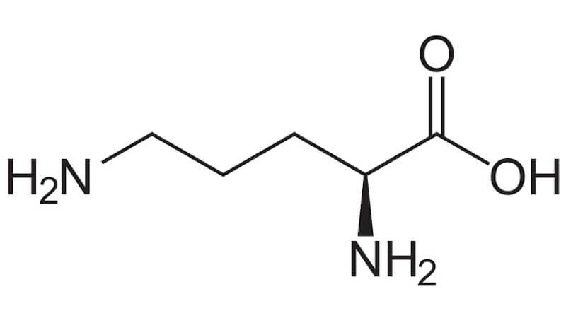 Aminosyran Ornitin i kroppen och som kosttillskott