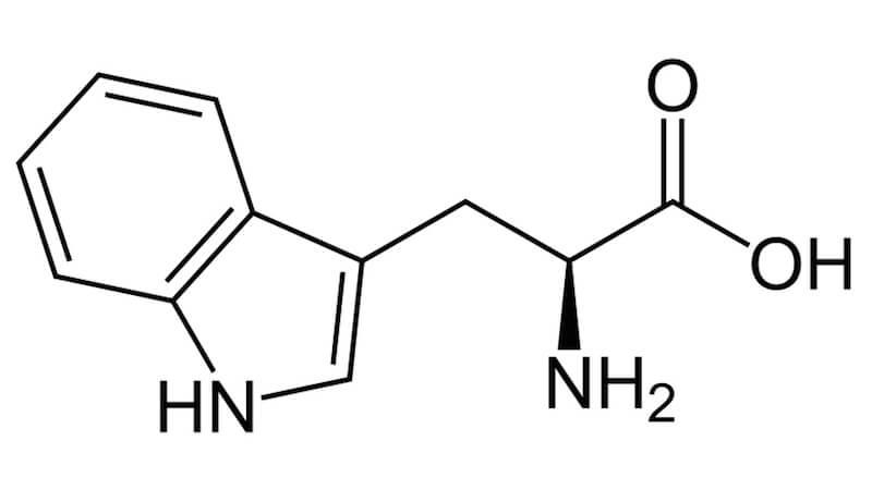 Egenskaper av aminosyran tryptofan i kroppen och som kosttillskott