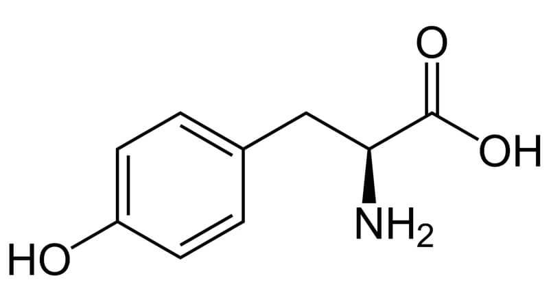 Aminosyran Tyrosin i kroppen och som kosttillskott
