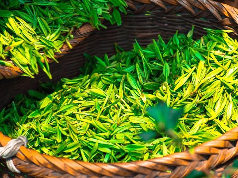 Grönt te som livsmedel och kosttillskott