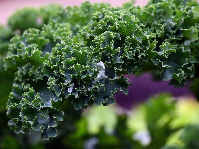 Mineralen kalcium i kosten och i kosttillskott