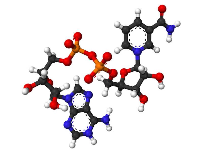 Funktion av NADH, Coenzym 1 i kroppen