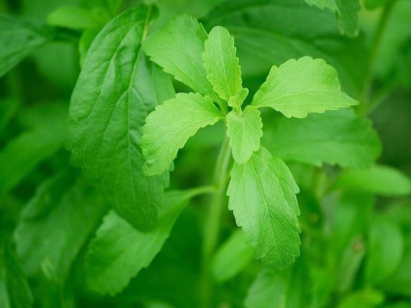 Stevia som sötningsmedel